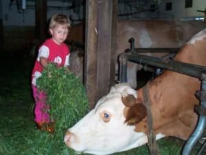 Bei den Kühen im Stall, Urlaub am Attersee